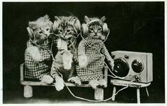 Cats checking out the top 40 countdown.